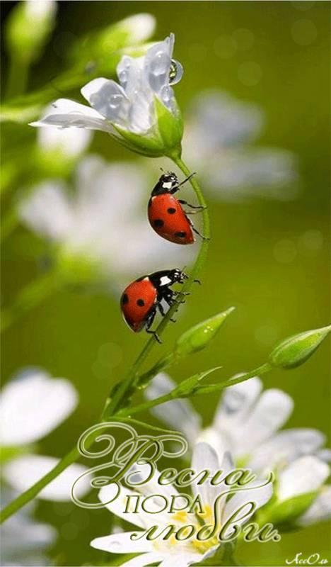 Весна пора любви, Весна