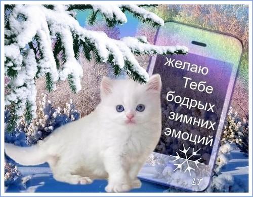 Желаю тебе бодрых зимних эмоции, Зима