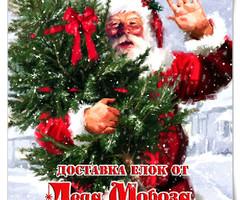 Доставка ёлок от Деда Мороза