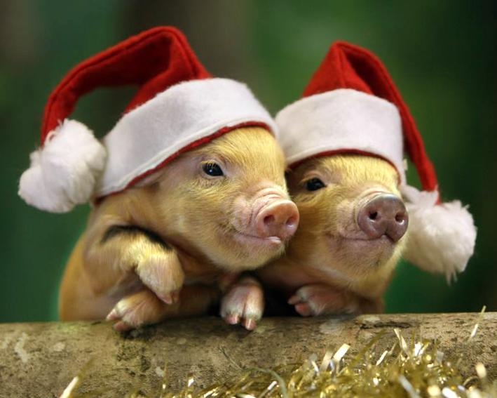 Свинья - символ нового года 2019, С Новым годом 2019