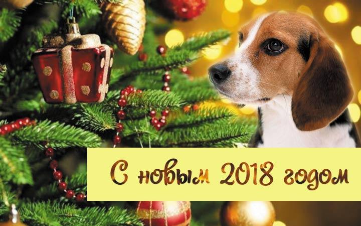 Открытка коллегам к новому году 2018 с собакой, С Новым годом 2019