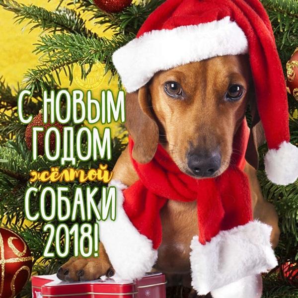 С Новым Годом желтой собаки 2018, С Новым годом 2019