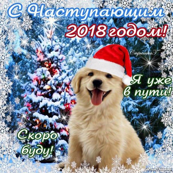 С Новым годом! Годом собаки!, С Новым годом 2018