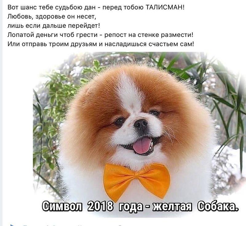 Символ 2018 года - желтая собака, С Новым годом 2019