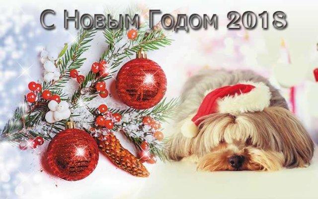 Наступает год собаки, С Новым годом 2019
